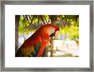 Colorful Macaw Framed Print by Anthony Doudt