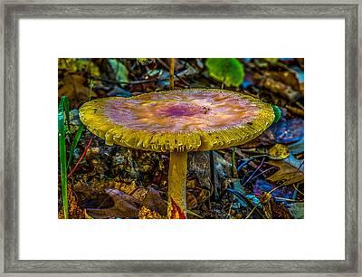 Colorful Mushroom Framed Print by Paul Freidlund