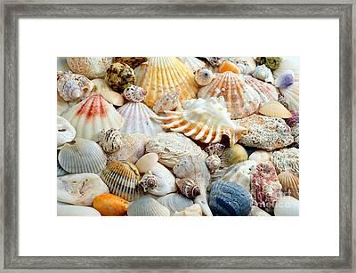 Colorful Ocean Seashells 2 Framed Print