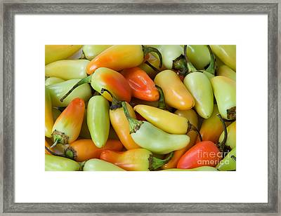Colorful Peppers Framed Print by James BO  Insogna