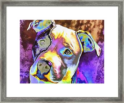 Colorful Pit Bull  Framed Print by Dan Sproul