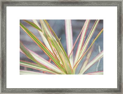 Colorful Plant Framed Print by Louise Hill