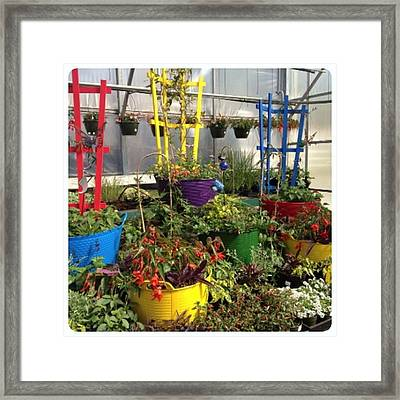 Colorful Planters For Climbers! Framed Print