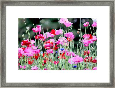 Framed Print featuring the photograph Colorful Poppies by Peggy Collins