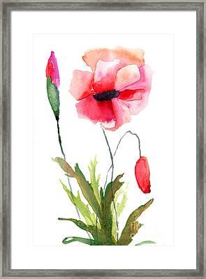 Colorful Poppy Flowers Framed Print