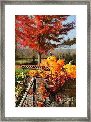 Colorful Pumpkins And Gourds Framed Print by Sandra Cunningham