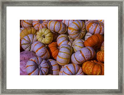 Colorful Pumpkins Framed Print by Garry Gay
