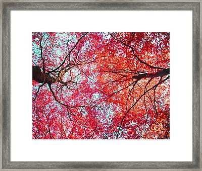 Abstract Red Blue Nature Photography Framed Print by Artecco Fine Art Photography