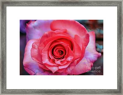 Colorful Rose Framed Print by Renee Barnes