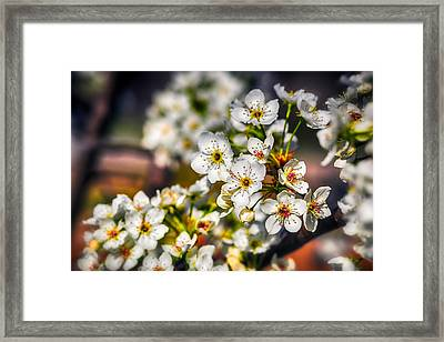 Colorful Spring Framed Print by Sennie Pierson