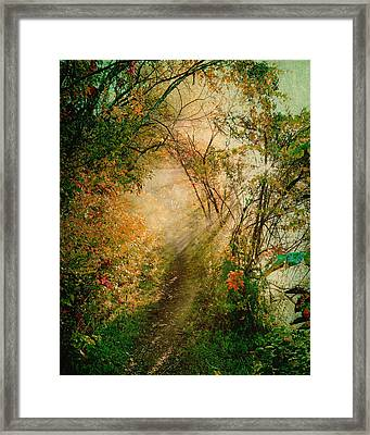Colorful Sunlit Path Framed Print