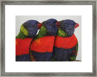 Colorful Therapy Framed Print