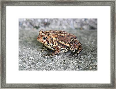 Colorful Toady Framed Print