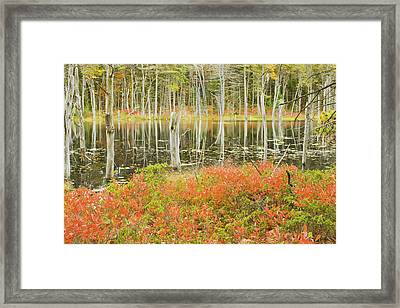 Colorful Trees Reflecting In Maine Beaver Pond Framed Print by Keith Webber Jr