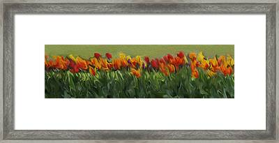 Colorful Tulips Framed Print by Art Spectrum