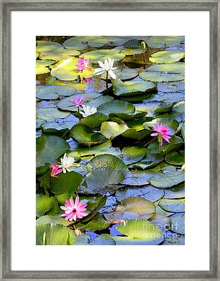 Colorful Water Lily Pond Framed Print