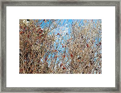 Colorful Winter Wonderland Framed Print