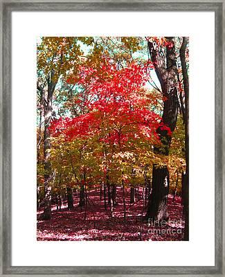 Colorful Woodland Framed Print