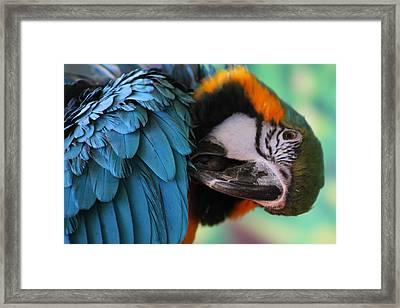 Colorful Wrap Framed Print