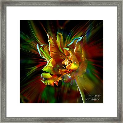 Colorfull Tulip Framed Print