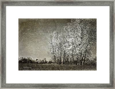 Colorless Fall Framed Print by Jeff Swanson