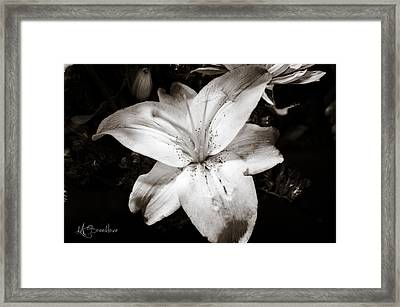 Colorless Framed Print by Lori Breedlove