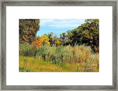 Colors Along The Gunnison Framed Print by Bob Hislop