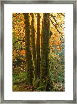 Colors In The Rainforest Framed Print by Adam Jewell
