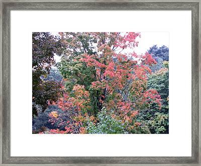 Colors Framed Print by Melissa Stoudt