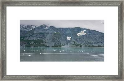 Colors Of Alaska - Glacier Bay Framed Print