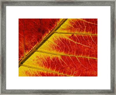 Colors Of Autumn Framed Print by Meir Ezrachi