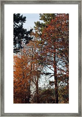 Framed Print featuring the photograph Colors Of Autumn by Tikvah's Hope
