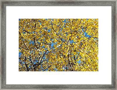 Colors Of Autumn - Yellow - Featured 3 Framed Print by Alexander Senin