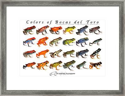 Colors Of Bocas Del Toro Framed Print by JP Lawrence