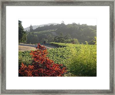 Colors Of Cali Framed Print by Shawn Marlow