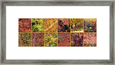 Colors Of Fall Collage Framed Print by Carol Groenen