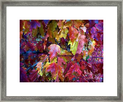 Colors Of Fall Framed Print by Janice Westerberg