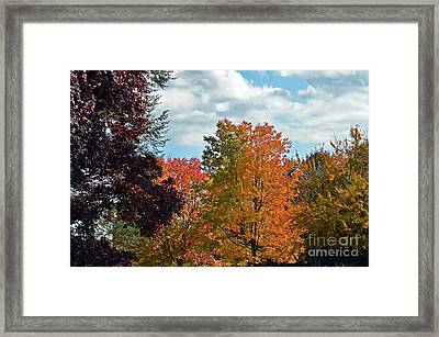 Colors Of Fall Framed Print by Judy Wolinsky