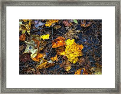 Framed Print featuring the photograph Colors Of Fall by Ludwig Keck