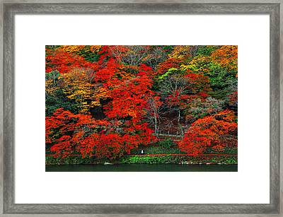 Colors Of Fall Framed Print by Midori Chan