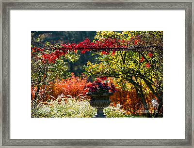Colors Of Fall Framed Print by Torbjorn Swenelius