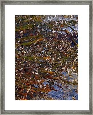 Colors Of Nature 7 Framed Print