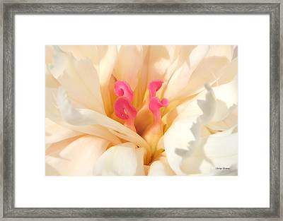 Colors Of Nature - Pink Centerpiece Framed Print
