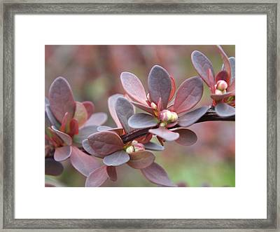 Framed Print featuring the photograph Colors Of Spring by Gene Cyr