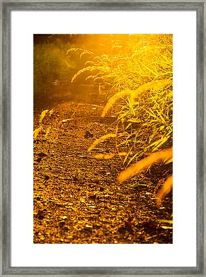 Colors Of Summer Framed Print by Kunal Mehra