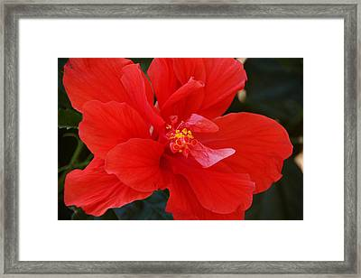 Colors Of Summer Framed Print by Thomas Fouch