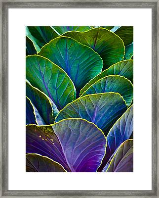 Colors Of The Cabbage Patch Framed Print
