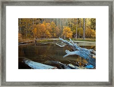 Colors Of The Forest Framed Print by Jonathan Nguyen