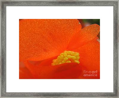 Colors Of The Sun Framed Print by Patti Whitten