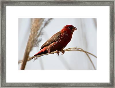 Colour Me Red Framed Print